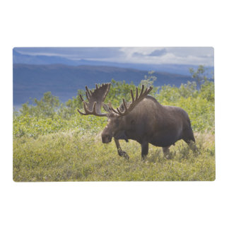 A large bull moose stands among willows laminated place mat