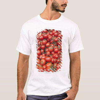 A large crop of tomato on a market stall in T-Shirt