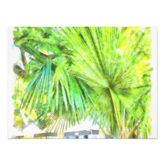 A large leaved palm tree photograph