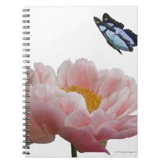 a large pink peony is visited by a ethereal notebooks