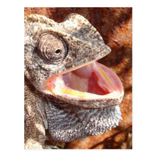 A Laughing Chameleon Postcard
