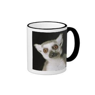 A lemur mugs