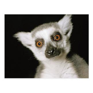 A lemur. postcard
