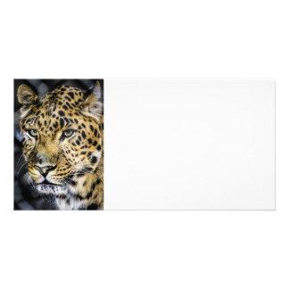 A Leopard's Eyes Custom Photo Card