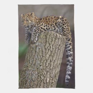 A Leopards Tail Kitchen Towel