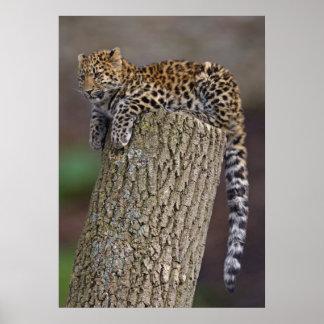 A Leopard's Tail Print