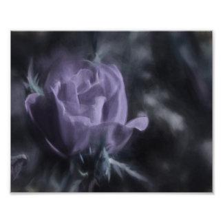 A Light Colored Purple Rose Flower Photo