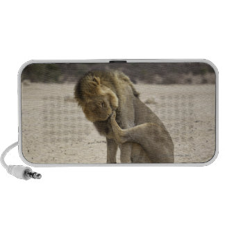 A Lion cleaning its back paw, Kgalagadi Travel Speaker