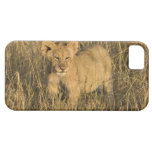 A lion cub laying in the bush in the Maasai Mara iPhone 5 Case