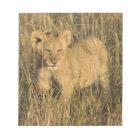 A lion cub laying in the bush in the Maasai Mara Notepad