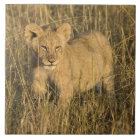 A lion cub laying in the bush in the Maasai Mara Tile