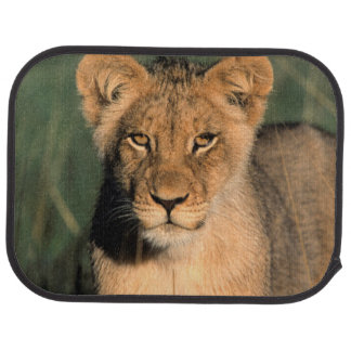 A Lion cub observes the camera from the long grass Car Mat