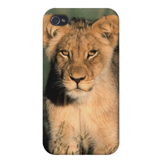 A Lion cub observes the camera from the long grass iPhone 4 Covers
