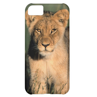 A Lion cub observes the camera from the long grass iPhone 5C Case