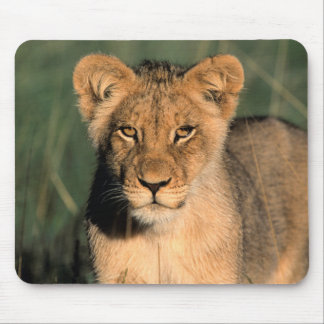 A Lion cub observes the camera from the long grass Mouse Mat
