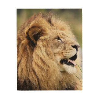 A Lion of Judah Wood Print