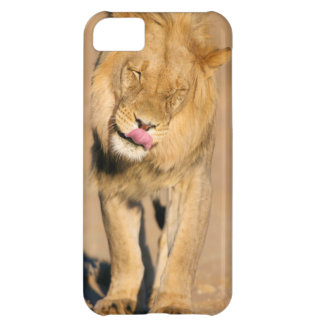 A Lion shaking its head and licking its mouth iPhone 5C Case