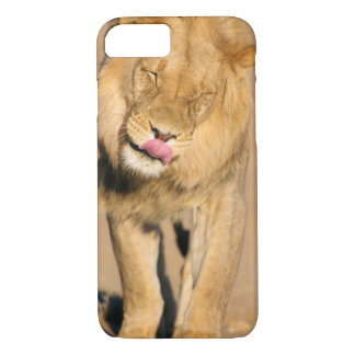A Lion shaking its head and licking its mouth iPhone 8/7 Case
