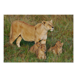 A Lioness and Her Cubs Poster