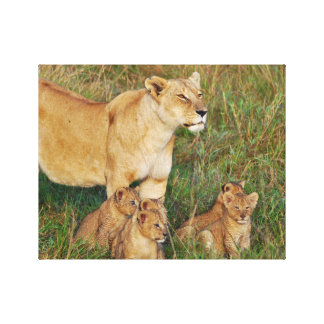 A Lioness and Her Cubs Stretched Canvas Print