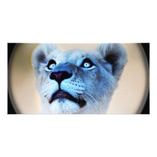 A lions surprise picture card