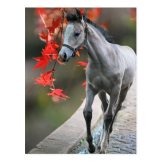A Little Foal Post Cards