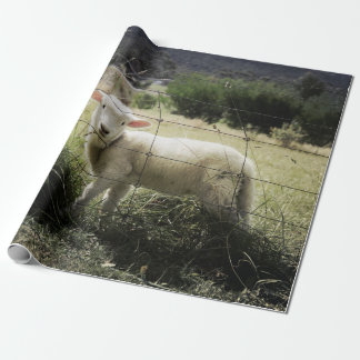 a little white lamb behind a fence in a field wrapping paper