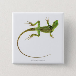A lizard on pure white ground 15 cm square badge