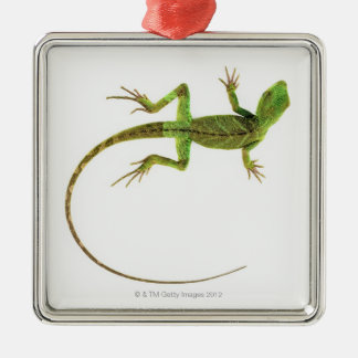A lizard on pure white ground christmas ornament