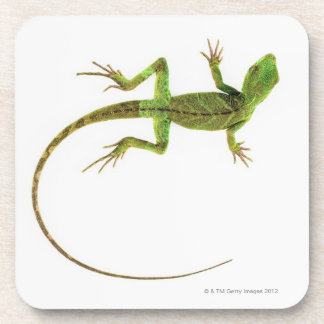 A lizard on pure white ground coaster