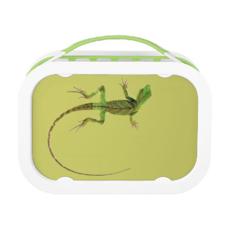 A lizard on pure white ground lunch box