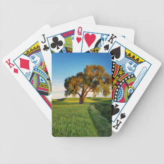 A lone tree surrounded by rolling hills of wheat bicycle playing cards