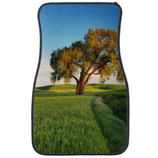 A lone tree surrounded by rolling hills of wheat car mat