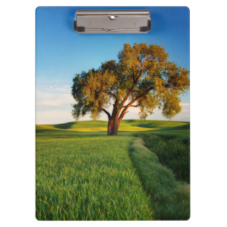A lone tree surrounded by rolling hills of wheat clipboard