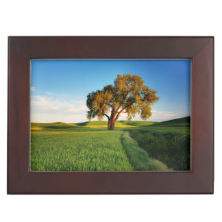 A lone tree surrounded by rolling hills of wheat keepsake box