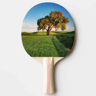 A lone tree surrounded by rolling hills of wheat ping pong paddle