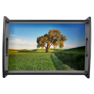 A lone tree surrounded by rolling hills of wheat serving tray