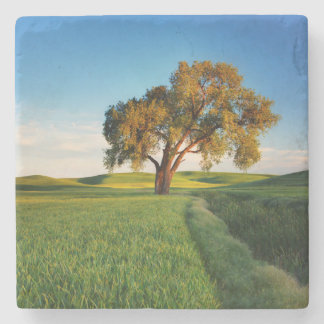 A lone tree surrounded by rolling hills of wheat stone coaster