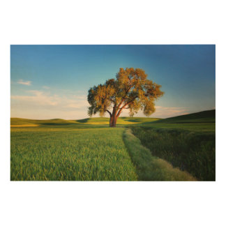 A lone tree surrounded by rolling hills of wheat wood print