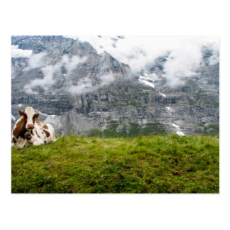 A lonesome cow in the Swiss Alps - Postcard