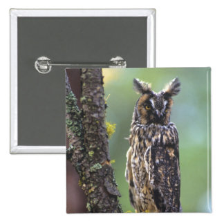 A long-eared owl perched on a tree branch near 15 cm square badge