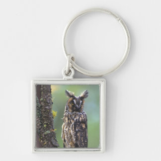 A long-eared owl perched on a tree branch near Silver-Colored square key ring