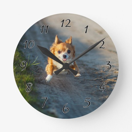 A long haired brown and white Chihuahua Running Wallclock