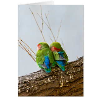 A Lovebird Couple On A Branch Card
