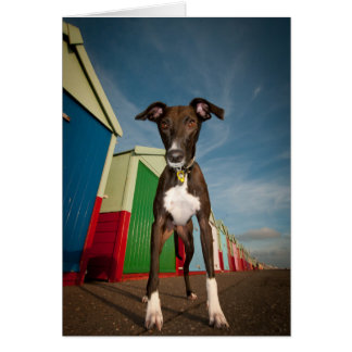 A Lurcher Standing In Front Of Some Beach Huts Card