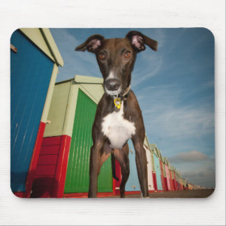 A Lurcher Standing In Front Of Some Beach Huts Mouse Pad