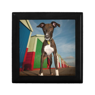 A Lurcher Standing In Front Of Some Beach Huts Small Square Gift Box