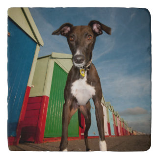 A Lurcher Standing In Front Of Some Beach Huts Trivet