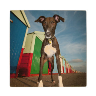 A Lurcher Standing In Front Of Some Beach Huts Wood Coaster