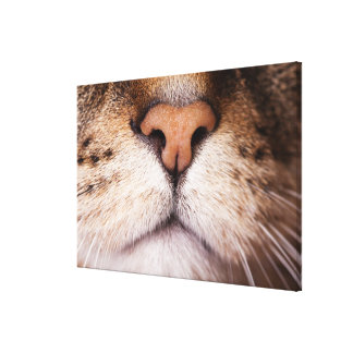 A macro image of a cat's nose and mouth. canvas print